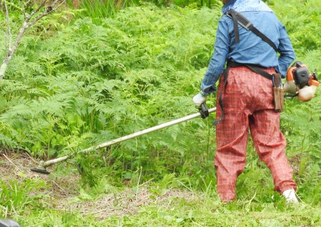 時津町で草刈りにかかる料金相場は?追加料金や業者選びのコツまで解説